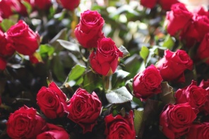 red-love-romantic-flowers-large.jpg